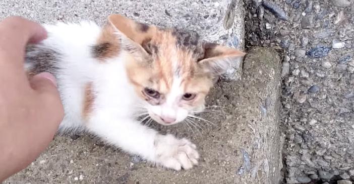 Юноша спас котенка от смерти и вместе с котом его выхаживал