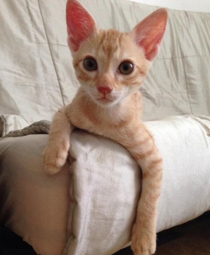 イスに撓る子猫