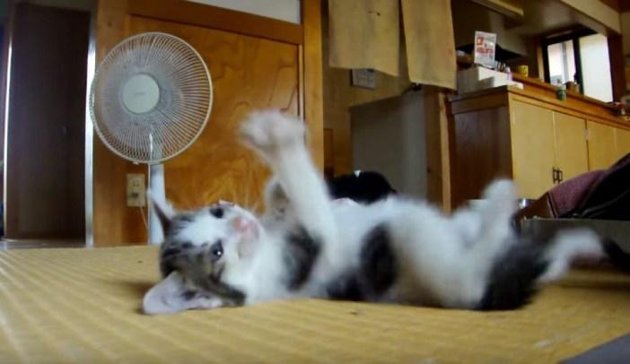 ゆっくりする子猫