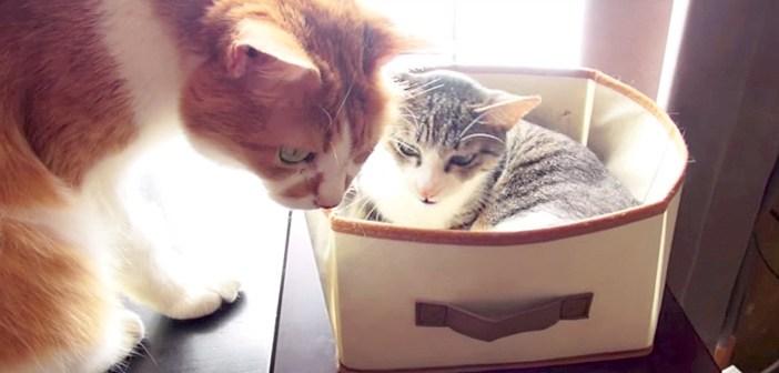 席をゆずる猫