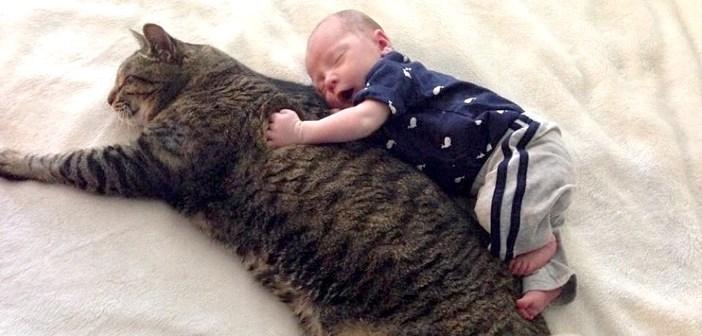 大きな猫の背中にしがみつく赤ちゃん