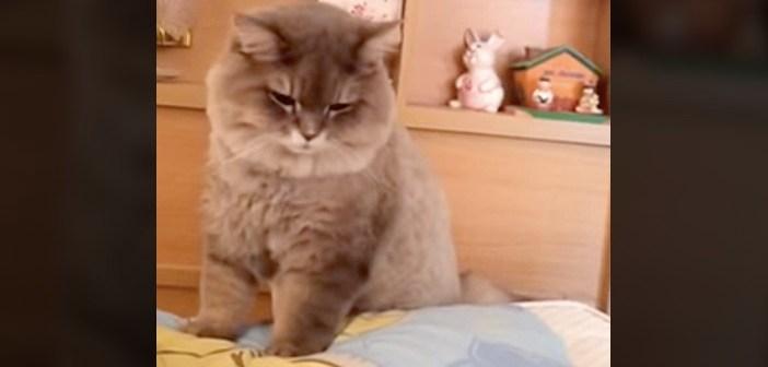ベッドの横でたたずむ猫