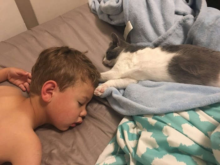昼寝する男の子と子猫