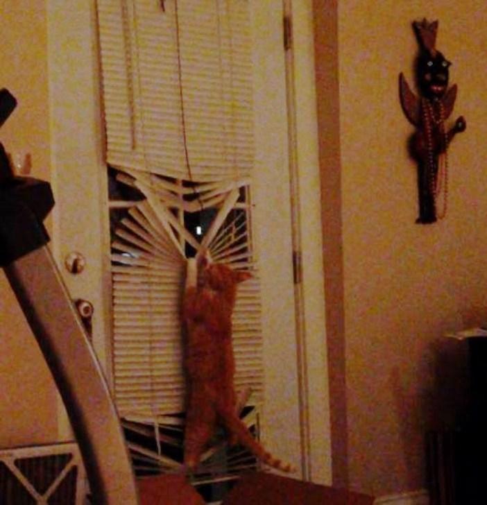 ブラインドを壊す猫