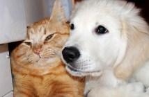 子犬を拒み続ける猫