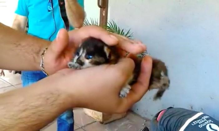 道路の下から救い出された子猫