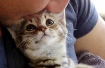 最高の笑顔の子猫