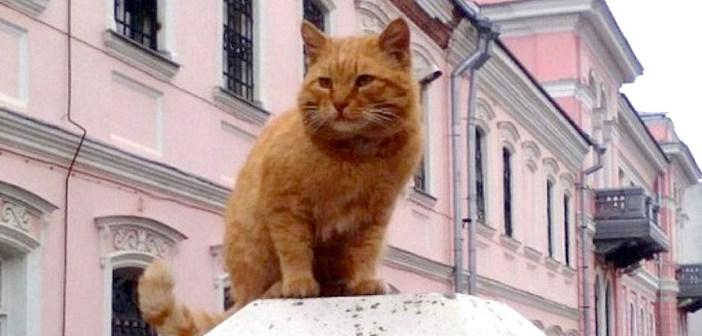 博物館に住み着いた猫
