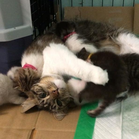 子猫の面倒を見る猫