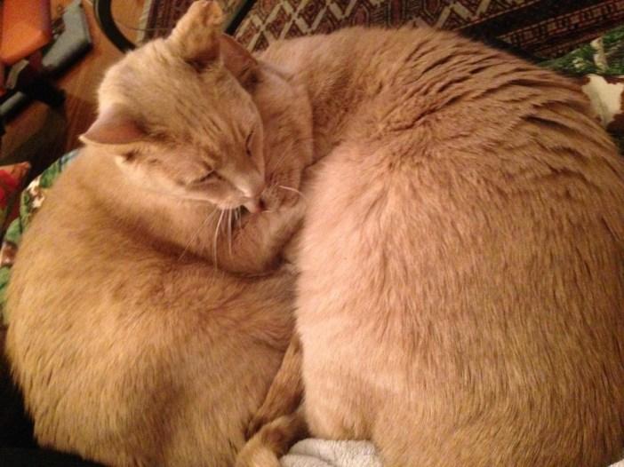 いっしょになった二匹の猫