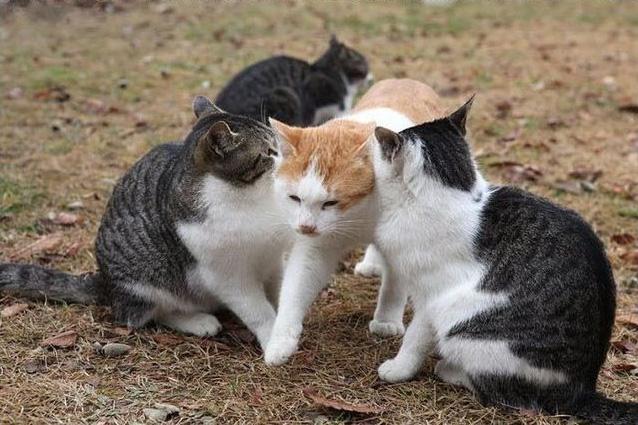強引に間を通る猫