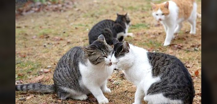 仲良しな猫を見た猫