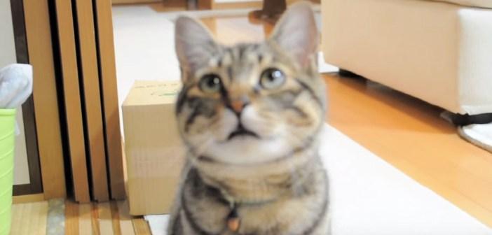 名前を呼ばれる猫
