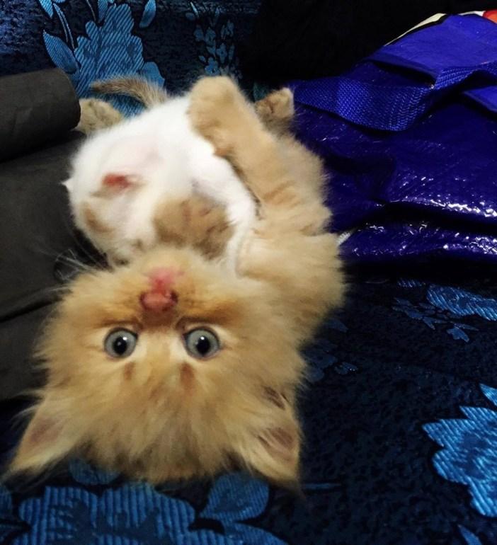 子猫を抱きしめる子猫