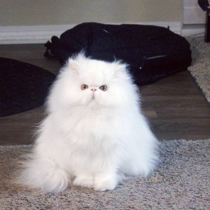ちょこんと座る猫