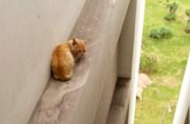 ビルから助けてもらった猫
