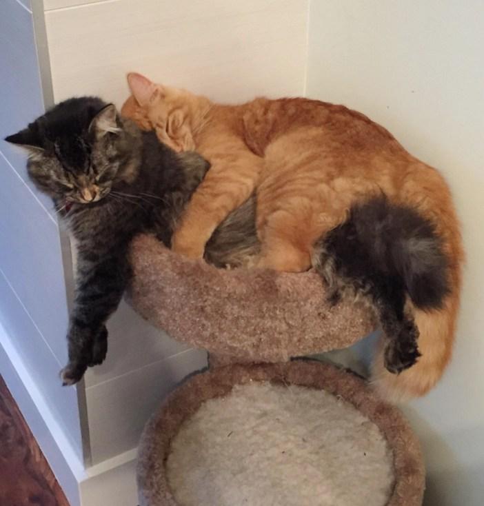 垂れてる2匹の猫
