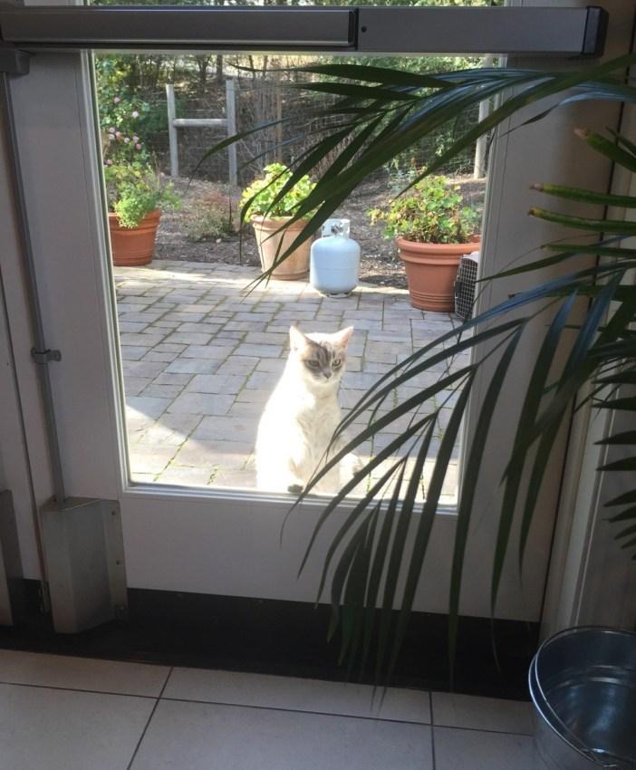 オフィスの中を覗いてくる猫