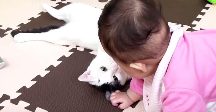 赤ちゃんと見つめ合う猫