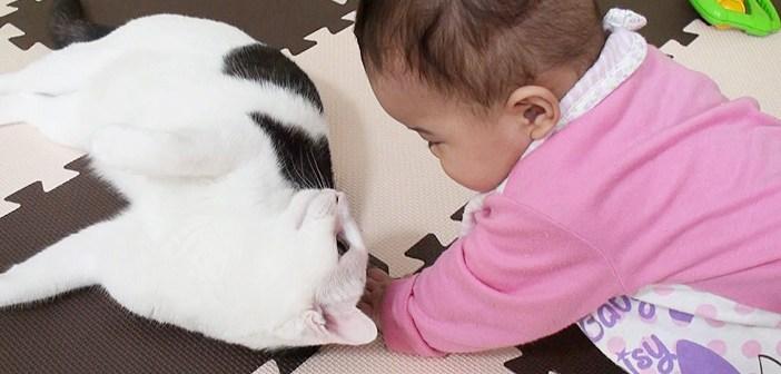 遊ぶ赤ちゃんと猫