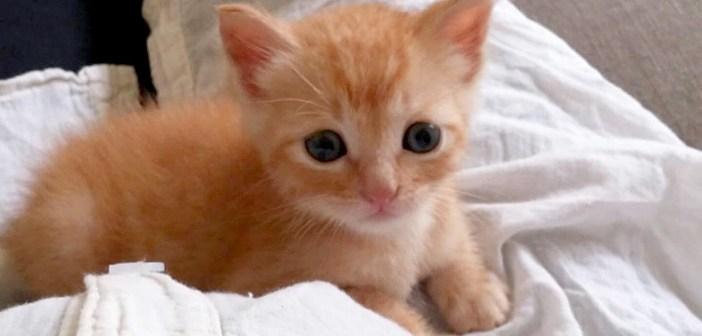 お腹の上に乗る子猫