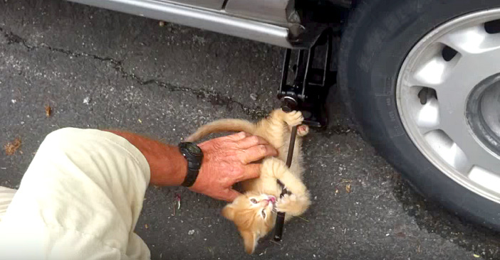 タイヤ交換を手伝う子猫