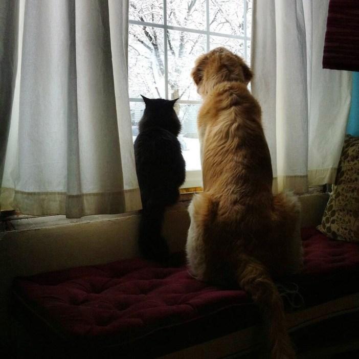 いっしょに外を見る犬と猫