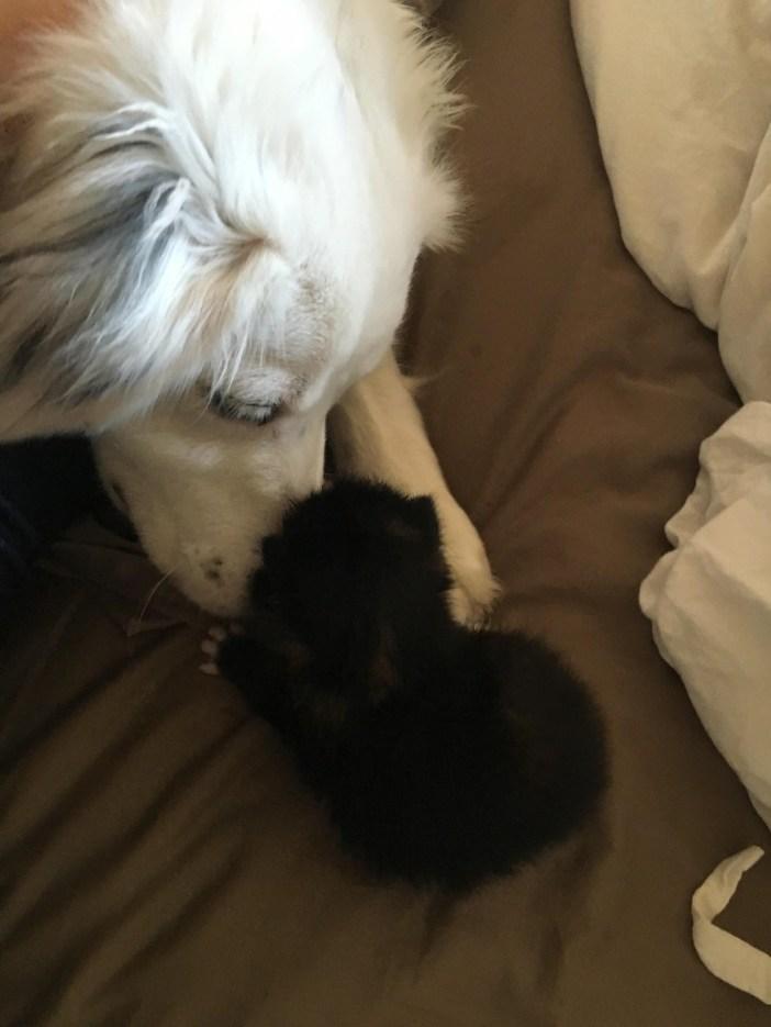 子猫の様子が気になる犬