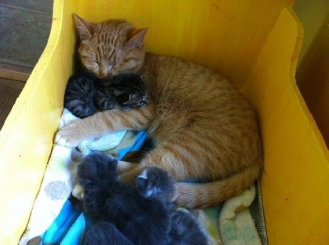 子猫の面倒を見る父猫