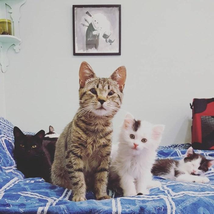 猫のみんなで記念撮影