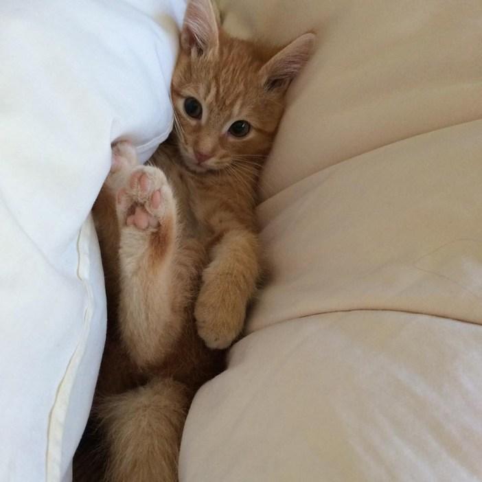 挟まる子猫
