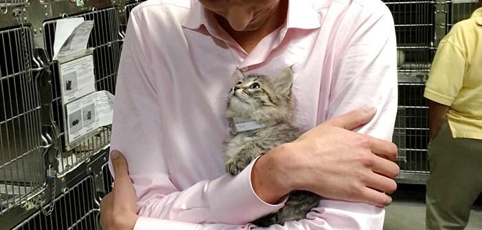 胸に飛び込んだ子猫