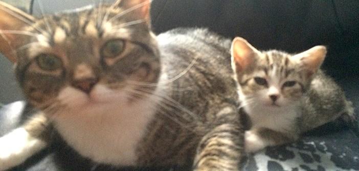 保護施設で親子一緒の猫