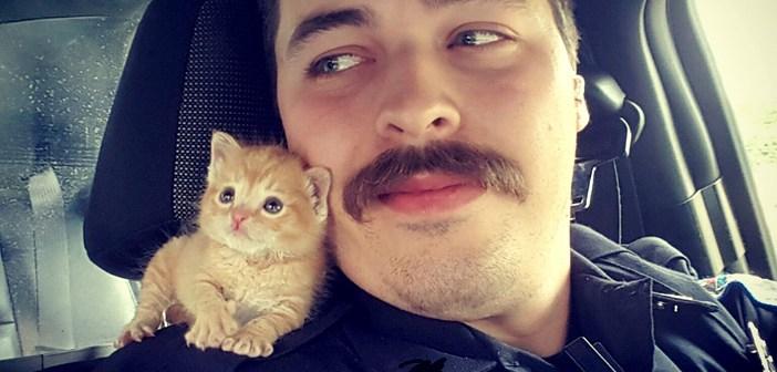 肩の上に乗る子猫