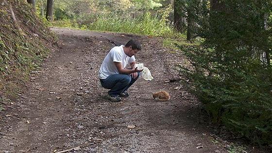 森の中で出会った子猫