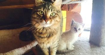 子猫を気に入った猫