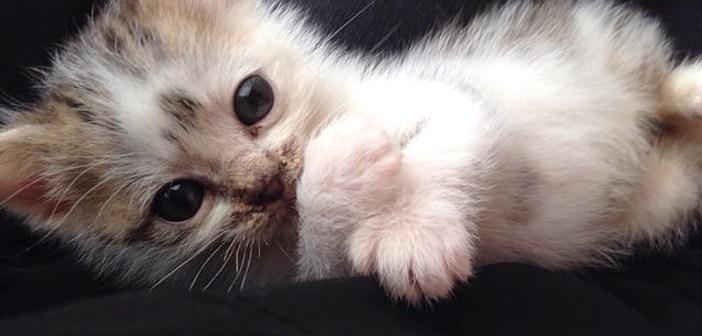 芝生で拾われた子猫
