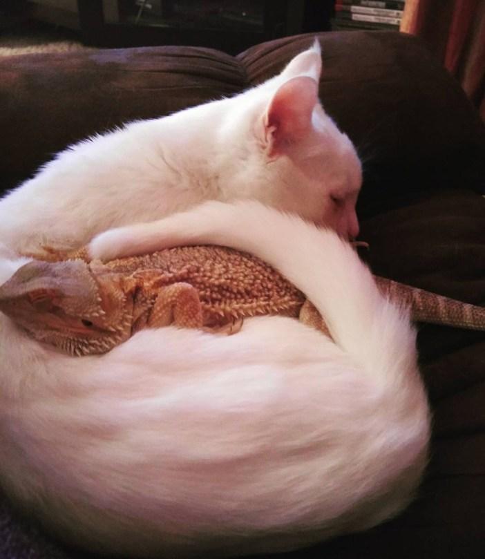 いっしょに眠るトカゲと猫