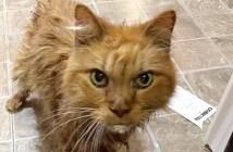 20歳の老猫
