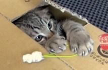 リアルいたずらBANK猫