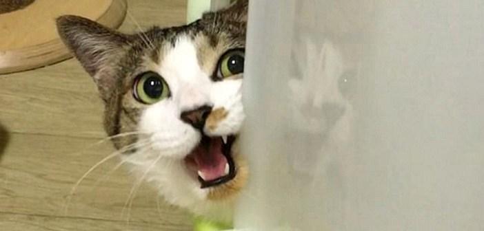 話をする猫