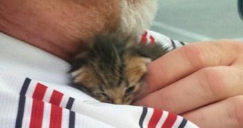 男性に助けられた子猫
