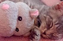 子猫とカバのヌイグルミ