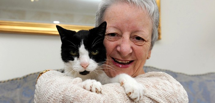 ガンを見つけた猫