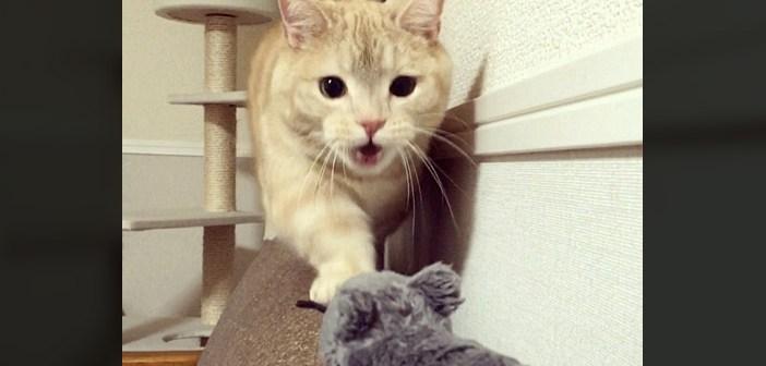 ネズミを見つけた猫