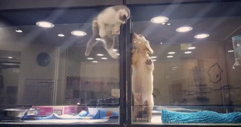 ケージから脱走する子猫