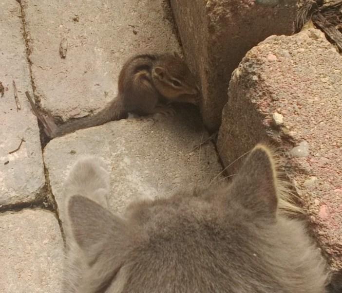 リスに近づく猫