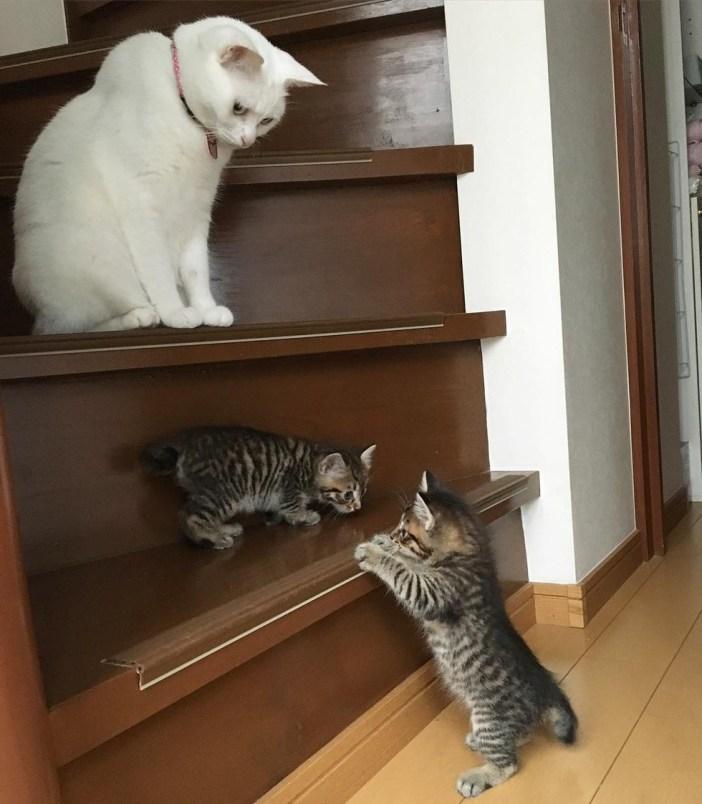子猫を見守る白猫