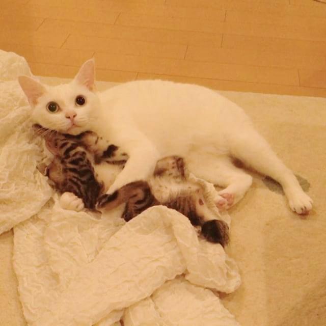 仲良しな子猫と先住猫