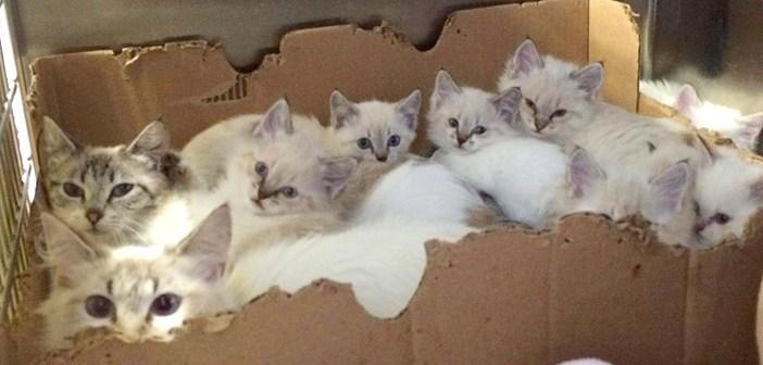 保護された母猫と7匹の子猫